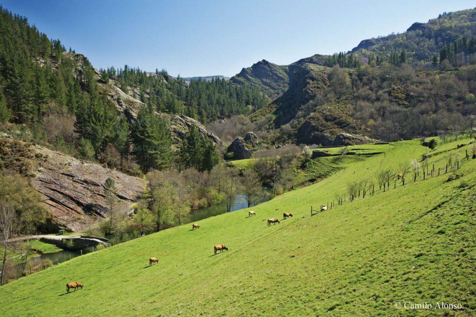 Río Agueira. OscosNatural